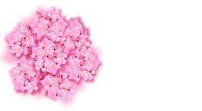 Dekorativa sakura blommor, bukett, designbeståndsdelar Kan användas för kort, inbjudningar, baner, affischer, tryckdesign stock illustrationer