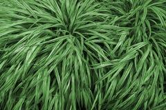 Dekorativa sidor av växterna Arkivbild