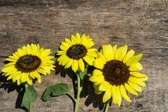 Dekorativa solrosor på träbakgrund royaltyfri fotografi