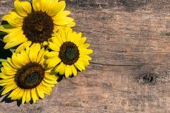 Dekorativa solrosor på träbakgrund royaltyfria bilder