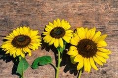 Dekorativa solrosor på träbakgrunden royaltyfria bilder