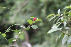 Dekorativa träd med rosa blommor arkivfoton