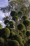 Dekorativa träd, natur, gräsplan, dekorativa träd arkivbild