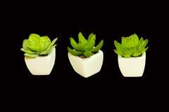 dekorativa växter Arkivfoto