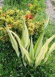 Dekorativa växter Arkivbild