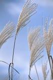 dekorativa växter Fotografering för Bildbyråer