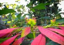 dekorativa växter Royaltyfria Foton