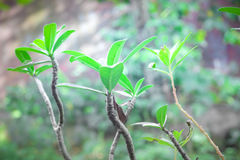 dekorativa växter Royaltyfri Fotografi