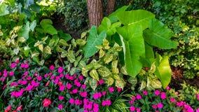 Dekorativa växter i botanisk trädgård arkivfoton