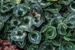 Dekorativa växter i växthuset för odling av blommor och dekorativa växter för att arbeta i trädgården, grön lövverkbakgrund Royaltyfria Foton