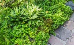 Dekorativa växter med stenen Arkivbilder