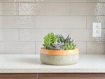 Dekorativa växter på graniträknare-överkant Arkivfoto