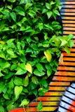 Dekorativa växter på trä royaltyfri foto