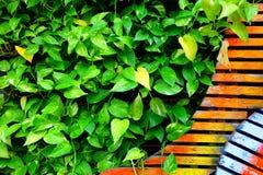 Dekorativa växter på trä arkivbild