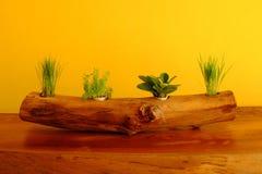 Dekorativa växter planteras i krukor som göras av journaler och gulinglodisar Royaltyfri Bild