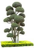 Dekorativa växter som isoleras på vit bakgrund Arkivbild