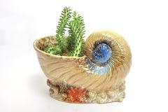 dekorativa växtkrukar för kaktus Royaltyfria Foton