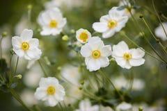 Dekorativa vita blommor Arkivbilder