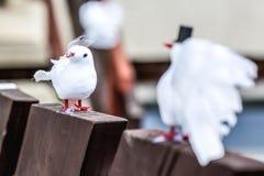 Dekorativa vita bröllopfåglar Arkivfoton