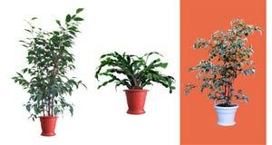 Dekorativa växter Royaltyfri Bild