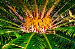 Dekorative ausführliche Mitte einer grünen Palme mögen Flammen stockfoto