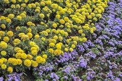 Dekorative Ausrichtung eines Blumenbeets Lizenzfreies Stockfoto