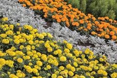 Dekorative Ausrichtung eines Blumenbeets Lizenzfreie Stockfotografie