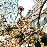 Dekorative Bäume mit rosa Blumen Lizenzfreies Stockfoto