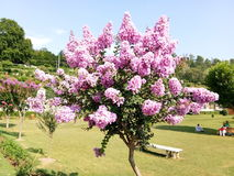 Dekorative Bäume mit rosa Blumen Stockbild