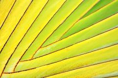 Dekorative Banane verlässt Zweig Stockfotos