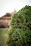 Dekorative Baumnahaufnahme Lizenzfreie Stockfotos