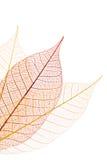 Dekorative Blätter Lizenzfreies Stockfoto