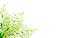 Dekorative Blätter Lizenzfreie Stockfotos