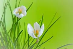 Dekorative Blume auf einem grünen Hintergrund Lizenzfreie Stockbilder