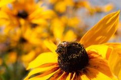 Dekorative Blume mit Insekt Stockbilder