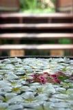 Dekorative Blumen, die in Wasser schwimmen Stockbild
