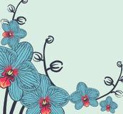 Dekorative Blumenanordnungsorchidee Lizenzfreie Stockbilder