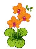 Dekorative Blumenanordnungsorchidee Lizenzfreies Stockbild