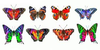 Dekorative bunte Schmetterlinge auf weißem Hintergrund lizenzfreie abbildung