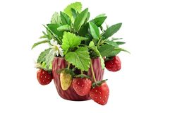 Dekorative Erdbeere Stockfotos