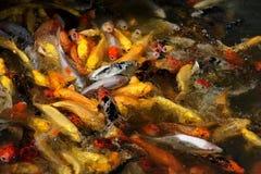 Dekorative Fische Lizenzfreies Stockbild