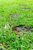 dekorative Fliese des Gartens in den Baumstümpfen, Verbreitung heraus im Gras Lizenzfreie Stockbilder