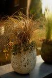 Dekorative Getreide in den Wannen im Gartendesign Die Ästhetik des Gartens lizenzfreies stockbild