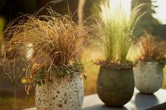 Dekorative Getreide in den Wannen im Gartendesign Die Ästhetik des Gartens stockbilder