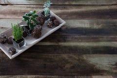 Dekorative Grünpflanzen auf Weinlesehintergrund für Botanikkonzept Lizenzfreie Stockfotos