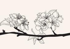 Dekorative Kirschblüte Stockfoto