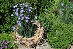 Dekorative Kräuter und Blumen Stockfotografie