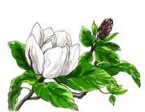 Dekorative Magnolienblume Lizenzfreie Stockfotos