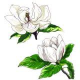 Dekorative Magnolienblume Stockbilder