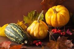 Dekorative Minikürbise und Herbstlaub für Halloween Stockfoto